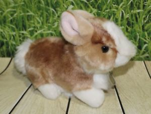 Spring White and Tan Baby Rabbit