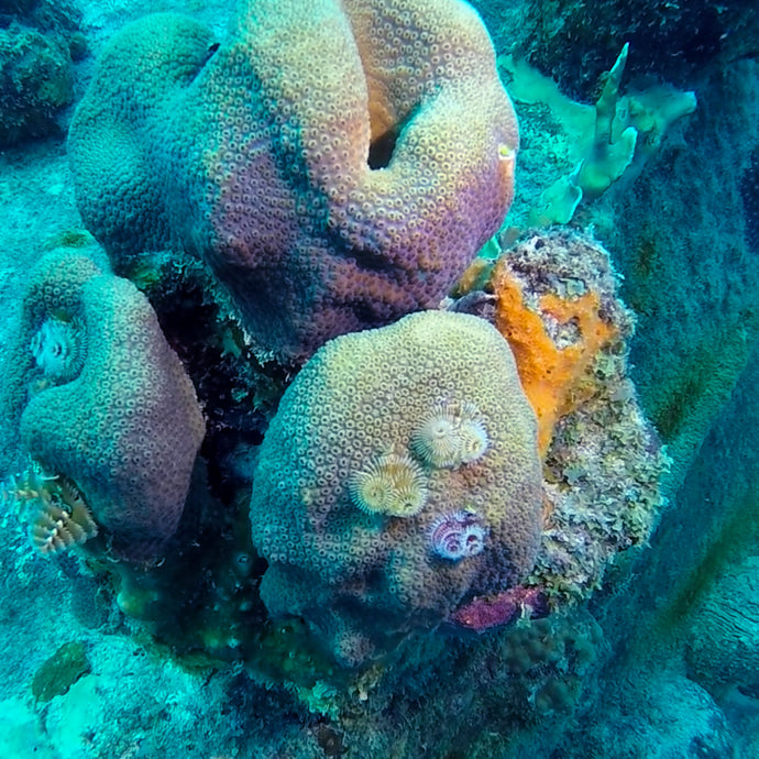 Finding Creative Inspiration from Bonaire's Beautiful Reef