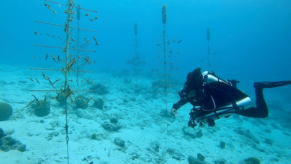 checking out the coral nursery at Buddy Dive Resort in Bonaire