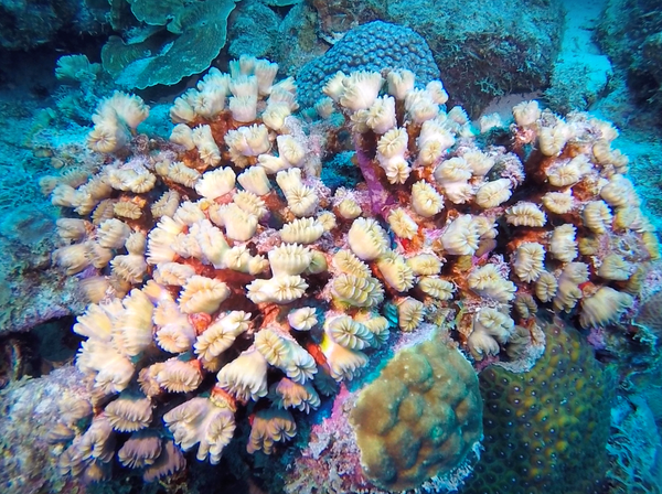 Hard coral in Bonaire