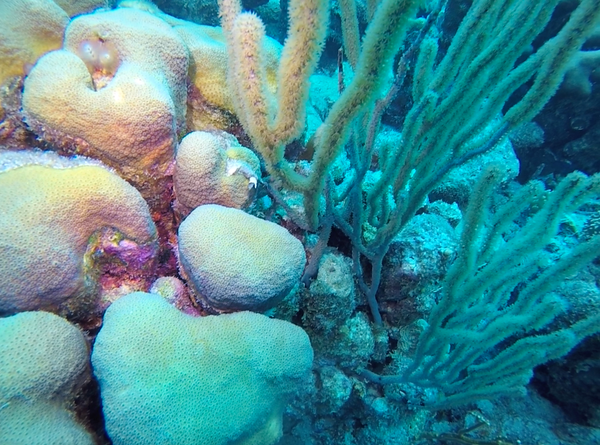 colourful coral in Bonaire