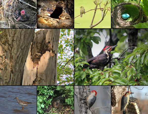 The Birds of the Midwest: 2020 Calendar