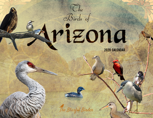 The Birds of Arizona: 2020 Calendar