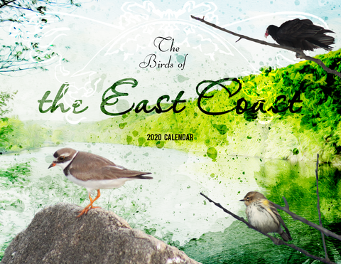 The Birds of the East Coast: 2020 Calendar