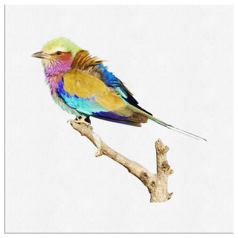 Lilac-breasted Roller Canvas Wrap