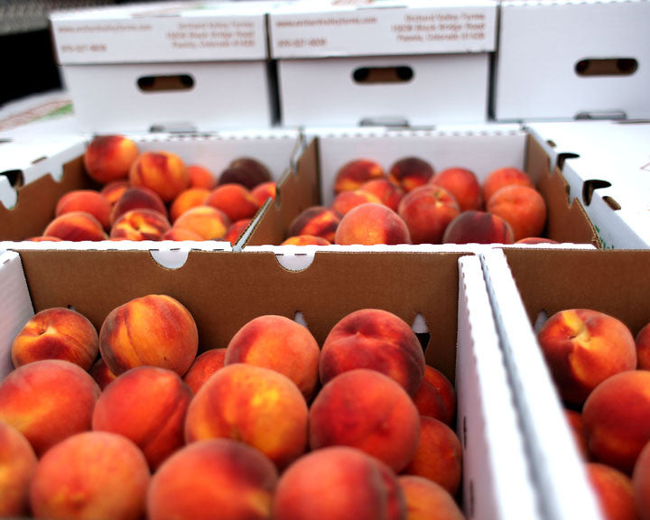 Boxes full of ripe peaches from Paonia Colorado used for making Red Camper Colorado Whiskey Peach Preserves