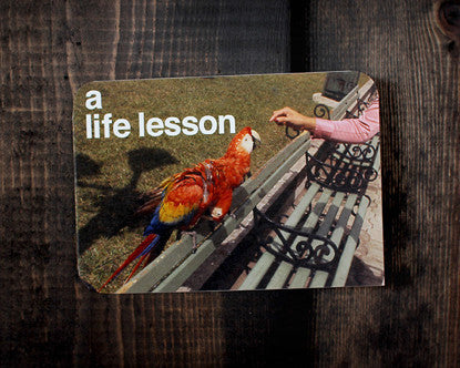 RedCamper Retro Greeting Card 1960's Slide Image - Person feeding parrot on park bench Text - A Life Lesson, Mother's Day Card