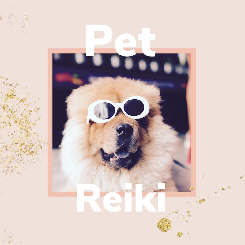 Book an Individual Distant Pet Reiki Session With Rylee