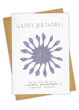 African Daisy Birthday Card