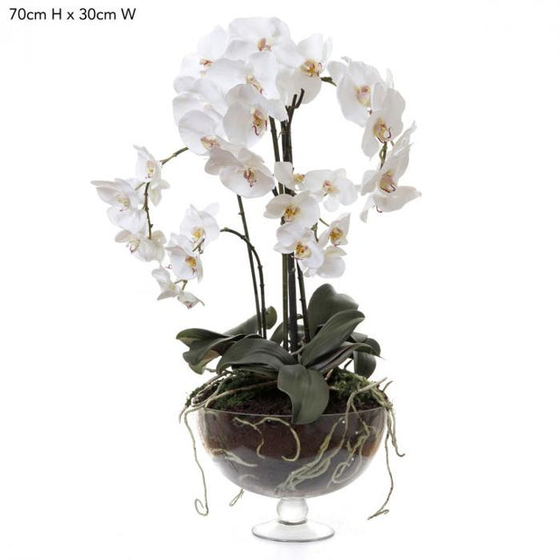 Phalaenopsis Orchid - Clear Glass Vase