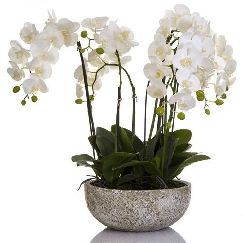 Orchid Spray of 7  - White Clay Pot
