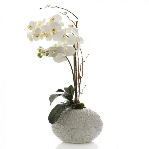 Faux Phalaenopsis Orchid - Shell Vase