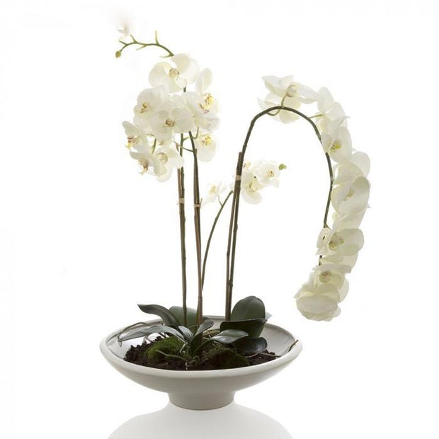 Faux Orchid Phalaenopsis - White Pot