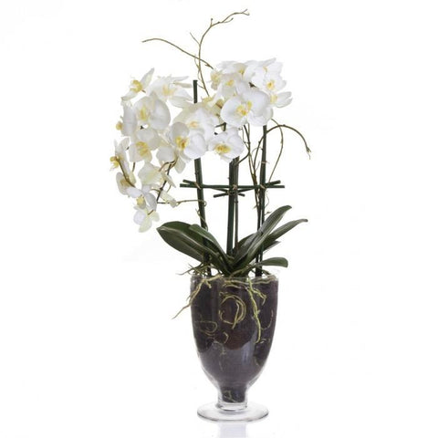 Phalaenopsis Orchid - Glasse Vase with Stand