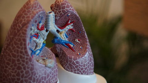 human lung health and breathing