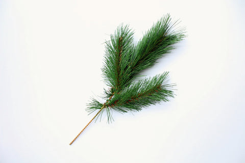 Pine Needle Spray