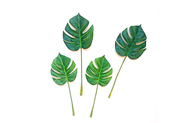 Mini Monstera Leaves | Pop Roc Parties