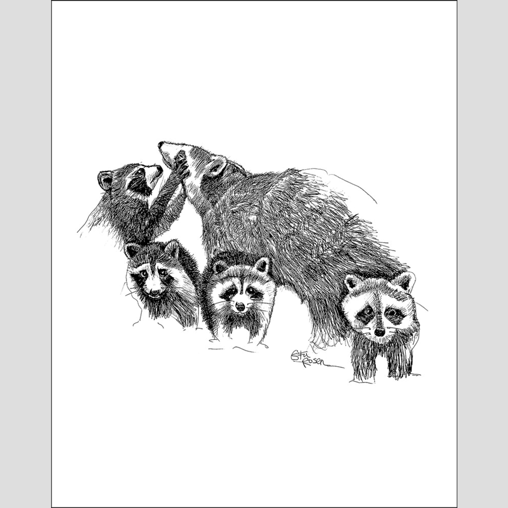 "Raccoon ""Hand Full"" - Giclee Print"