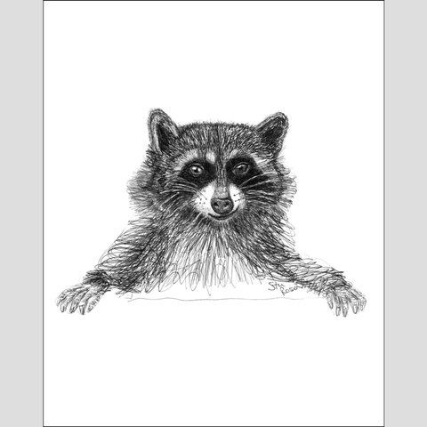 "Raccoon ""Scheming"" - Giclee Print"
