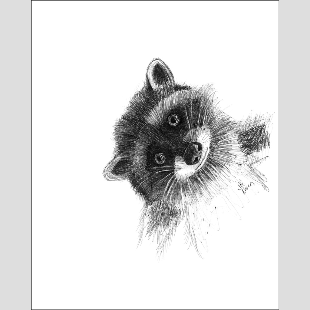 "Raccoon ""Hi There!"" - Giclee Print"