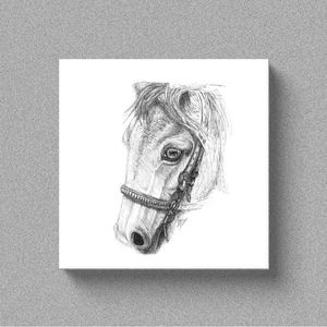 "Horse ""Gaze"" - Canvas"