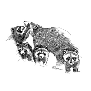 "Raccoon - ""Hand Full"""