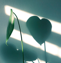 Plant with a heart-shaped shadow