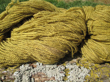 Load image into Gallery viewer, Plant-dyed Goldenrod Yarn - Sport Weight