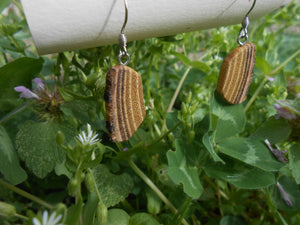 Black Locust Wood Earrings