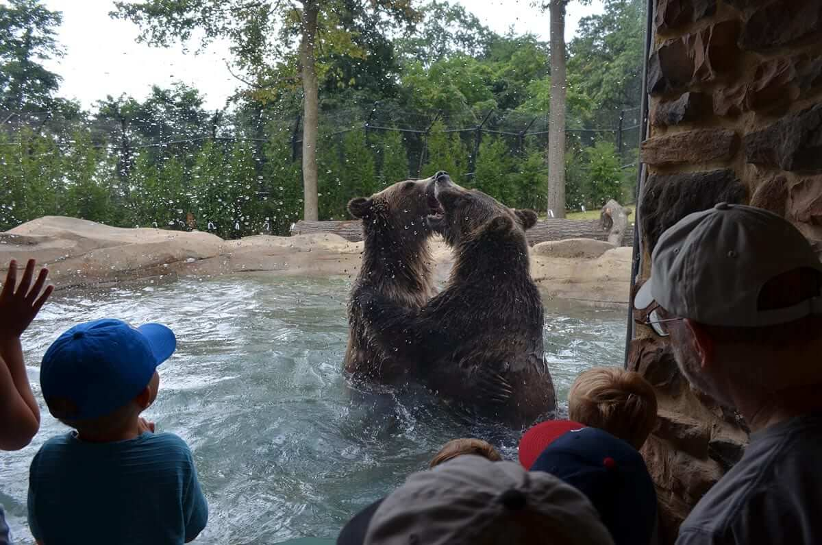 Grizzly Ridge at The Akron Zoo