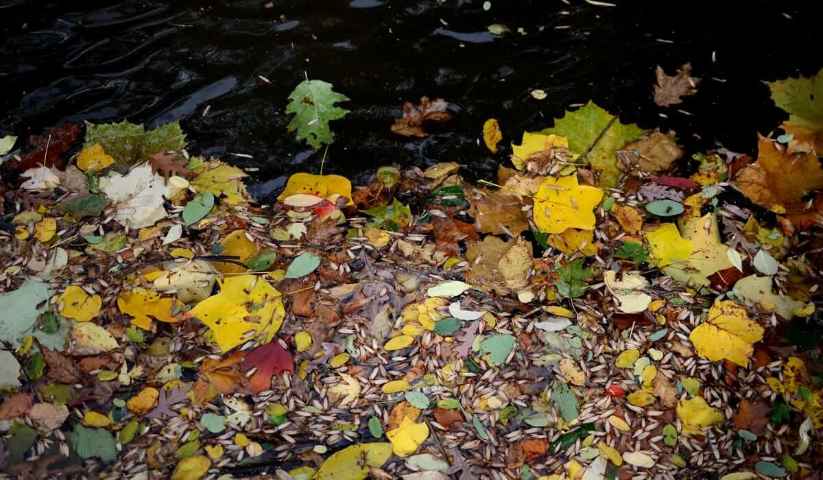 Leaves collect along Cuyahoga River's edge on Gorge Trail