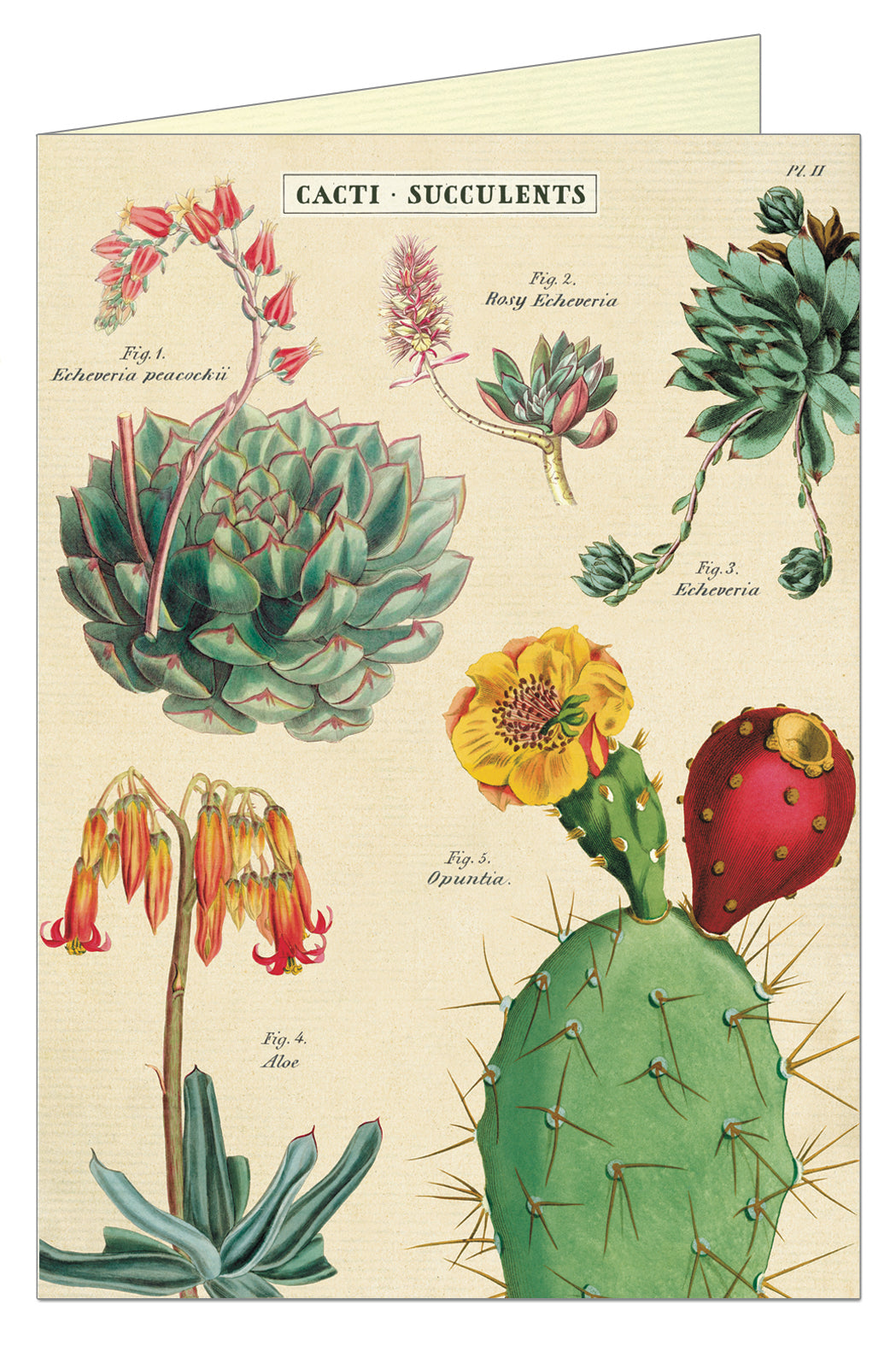 Greeting Card - Cacti and Succulents