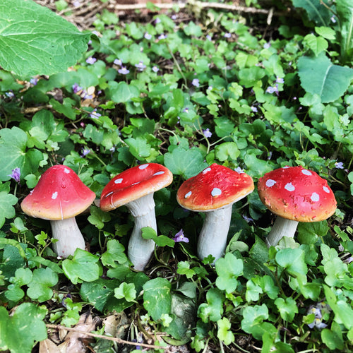 Toadstools - Set of 4