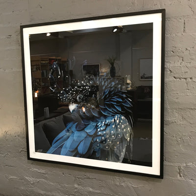 Black Cockatoo Photographic Print