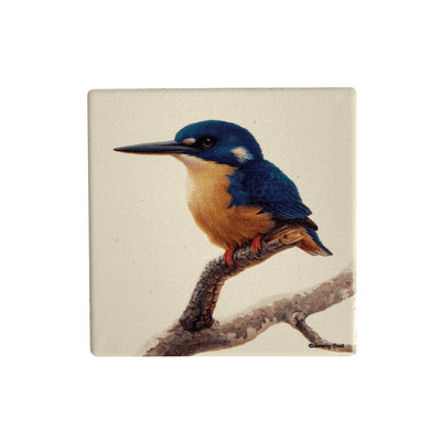 Birds of Australia Coaster | Azure Kingfisher