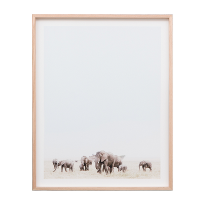 Travelling Herd Photographic Print