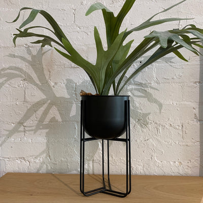 Alexis Plant Stand | Black