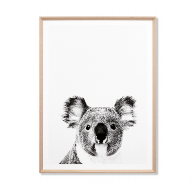 Koala Love Photographic Print