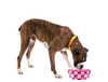 Modgy Expandable/Collapsible Dog Bowls