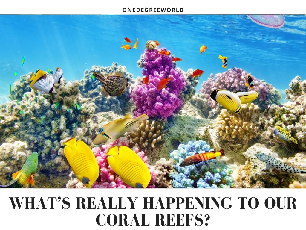 What's really happening to our coral reefs?