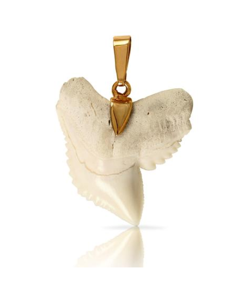 10216T - SHARK TOOTH PENDANT - Jewelry Works