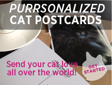 Purrsonalized Cat Postcards