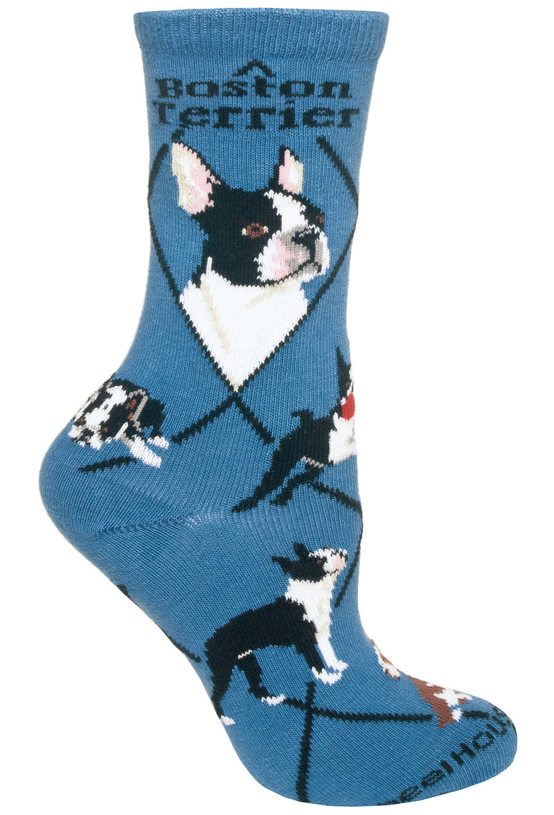 Boston Terrier on Blue Socks