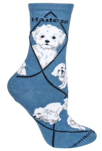Maltese, Puppy Cut on Blue Socks