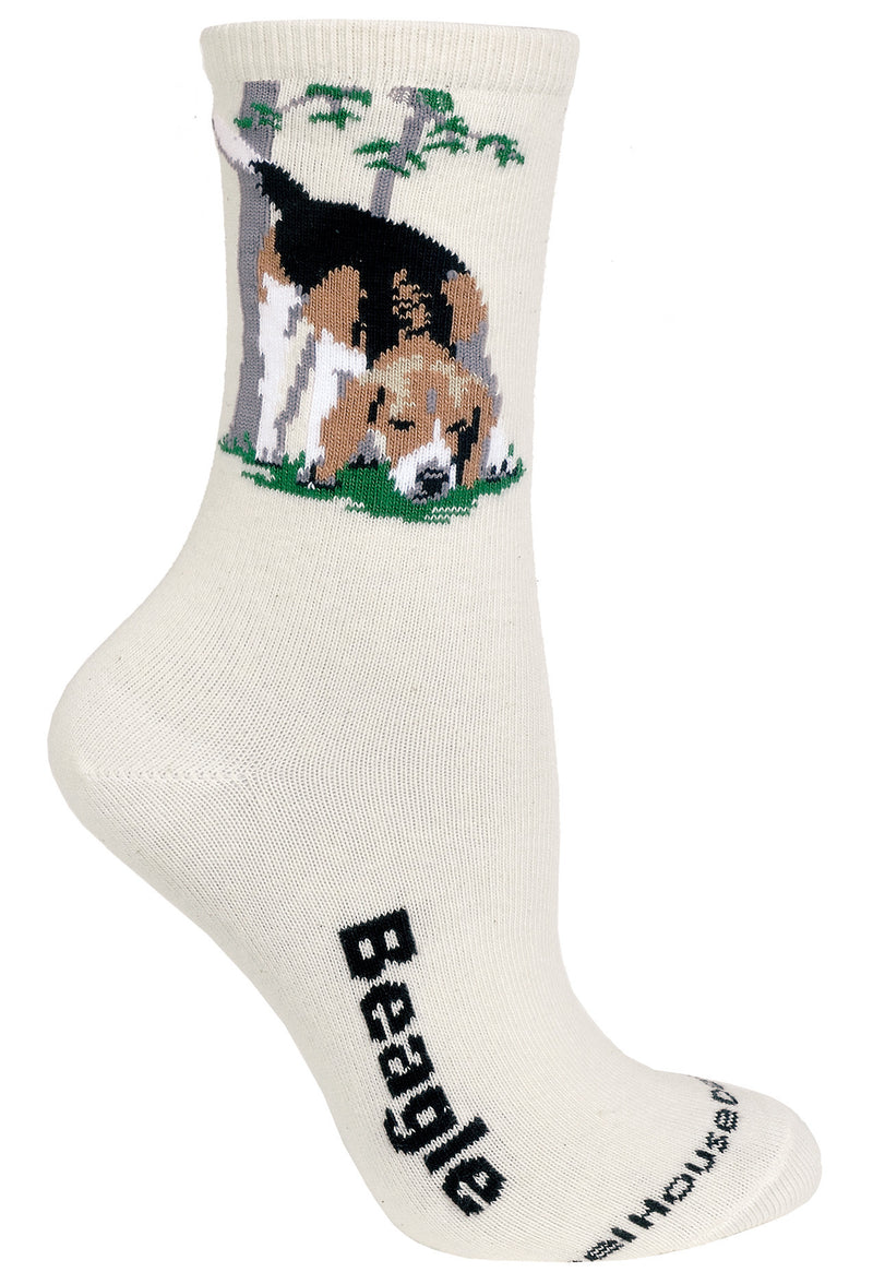 Beagle on Natural Socks