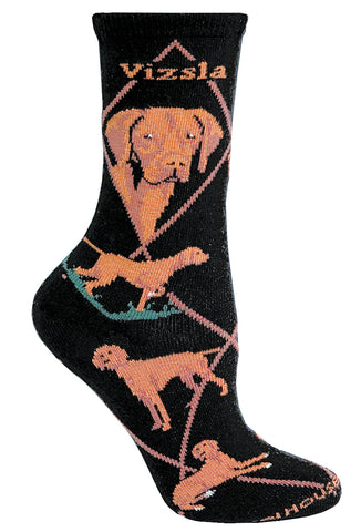 Vizsla on Black Socks