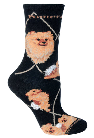 Pomeranian on Black Socks