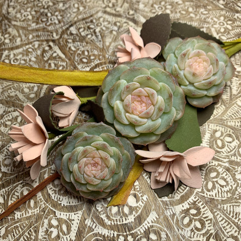 Echeveria Pure Love (1)