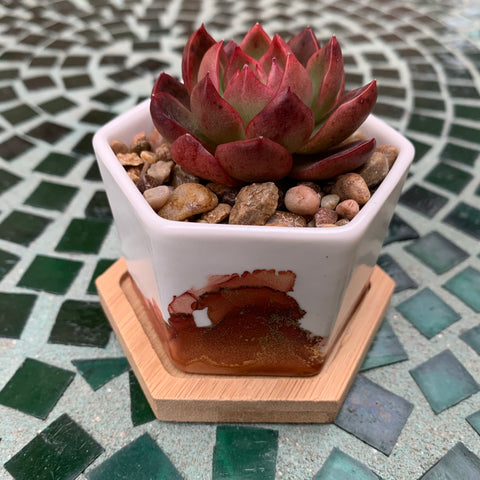 Lemesto Mini Planter + Bamboo Dish (5 colors)