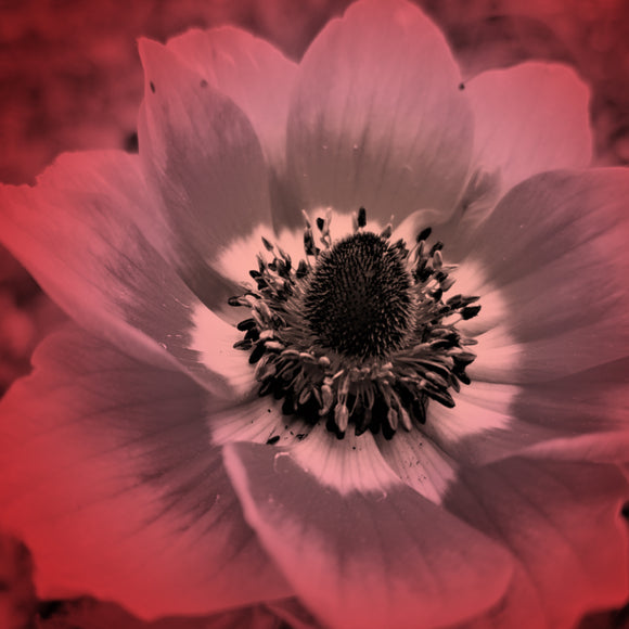 red anemone digitally-printed fabric